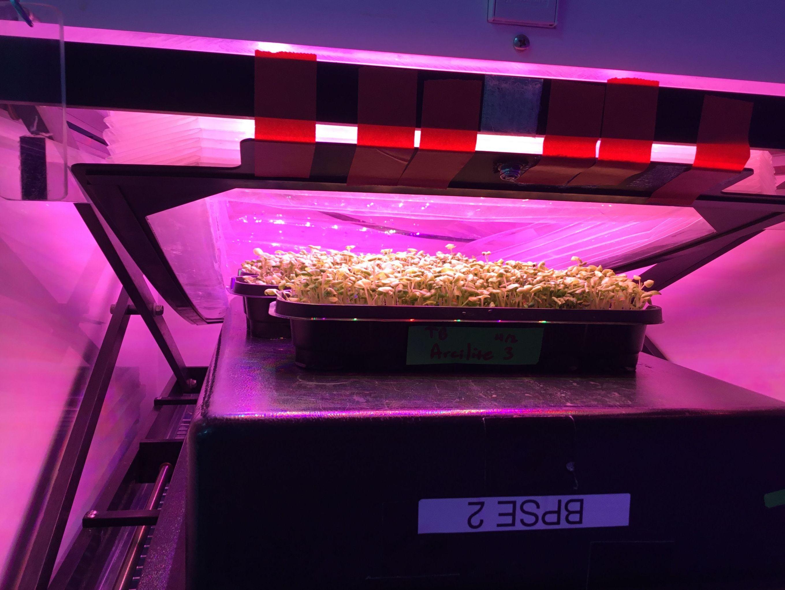 Las luces LED están en el centro de esta técnica que investigan mexicanos para plantar vegetales en el espacio