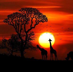 Animales en África