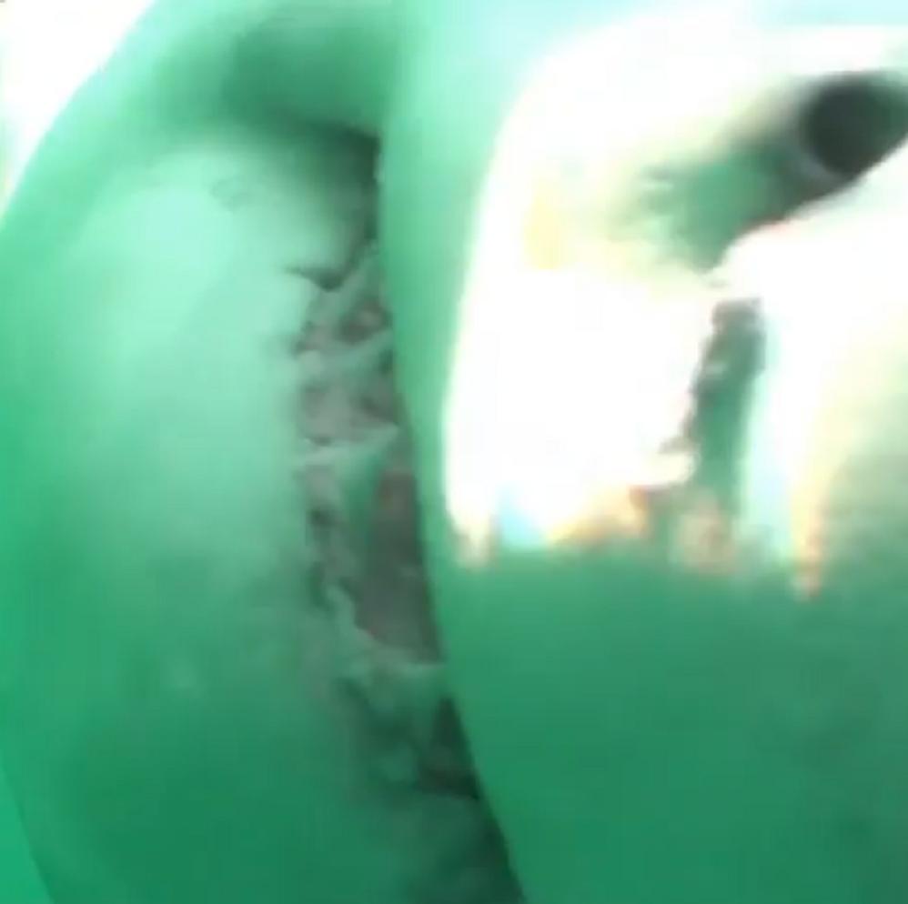 Un gran tiburón blanco muerde una cámara