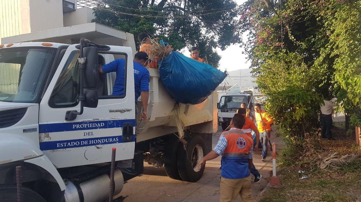 Acciones contra el mosquito 'aedes aegypty' en Honduras por emergencia nacional por dengue