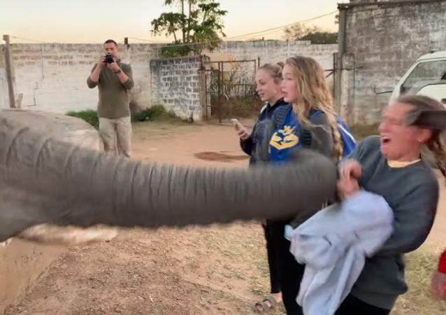 Trompazo aleccionador: así un elefante le dice no a una 'paparazzi'