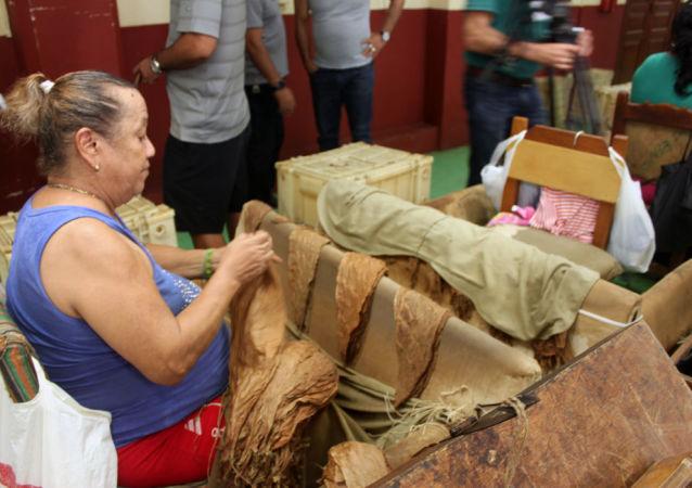 Tabaqueros cubanos