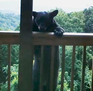 El escalofriante momento en el que un oso negro se sube a la azotea de una casa