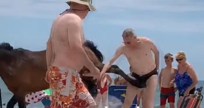 ¡No me toques!: un caballo patea a un turista maleducado