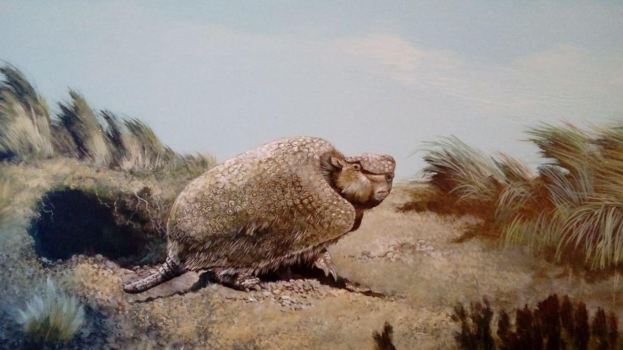 Imagen referencial: armadillo cavador que habitó Suramérica (Xenartros)