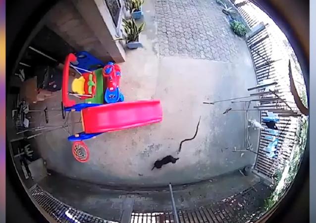 Dos perritos arriesgan su vida para salvar a un bebé de una cobra