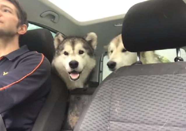 ¡Estos perritos no pueden contener la emoción al volver a ver a su dueño!