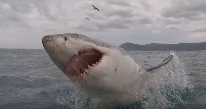 Un tiburón salta a cámara lenta