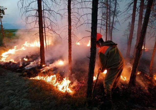 Incendios Forestales en Siberia, Rusia