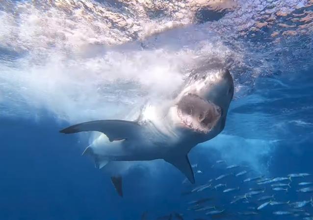 El espeluznante momento en el que un tiburón se acerca a un buzo en México