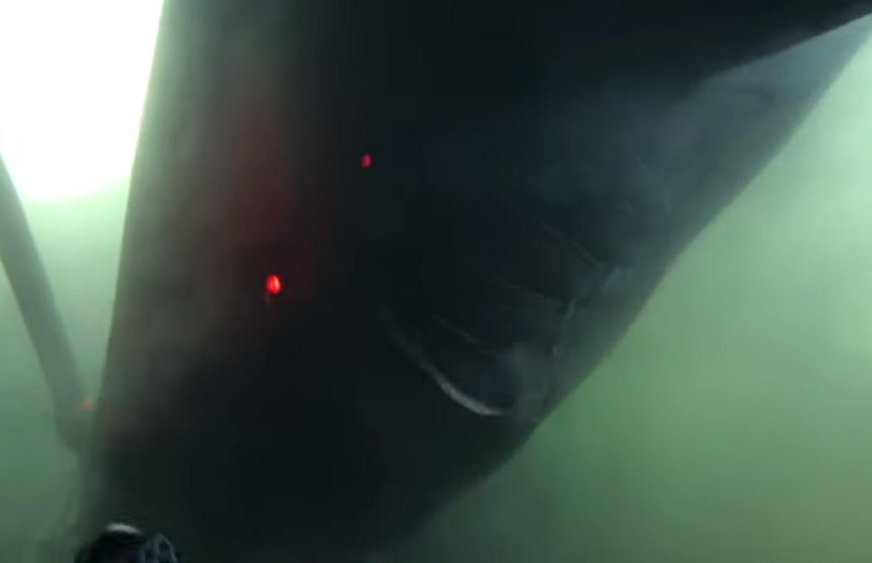 El tiburón de peinetas habita en las profundidades marinas