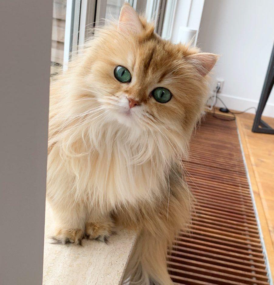Smoothie, la gata más fotogénica de mundo
