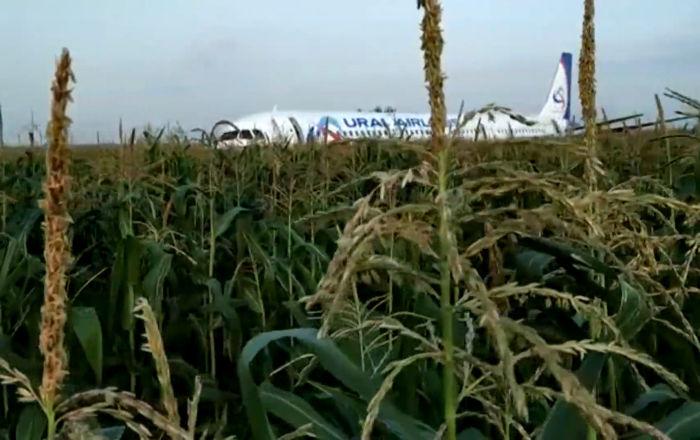Así fue el aterrizaje de emergencia del Airbus A321 cerca de Moscú