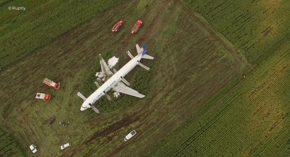 Avión con 234 pasajeros choca con aves, aterriza de emergencia en Rusia