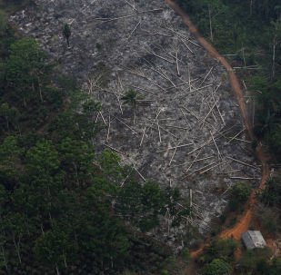 Deforestación en Amazonía
