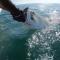 Un tiburón arranca violentamente un pescado de las manos de un hombre