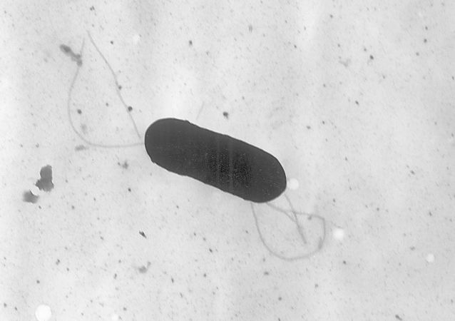 Listeria monocytogenes bacterium