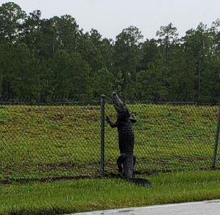 Un enorme réptil trepa una valla e invade una base militar en EEUU