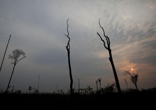 El bosque de Amazonía tras los incendios