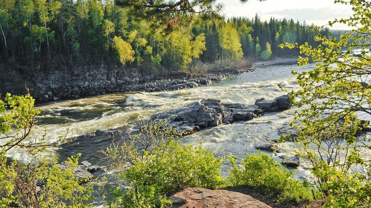 La taiga, o bosque boreal, es el ecosistema boscoso más extenso de la Tierra, extendiéndose desde Escandinavia, a través de Siberia y Alaska, hasta la costa oriental de Canadá. Cubre cerca del 17% de la superficie sólida del planeta y contiene cerca del 25% de los árboles de todo el mundo.
