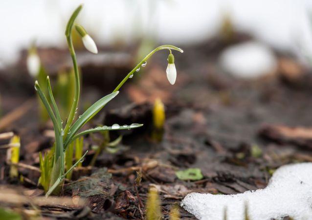 Flores cerca de nieve
