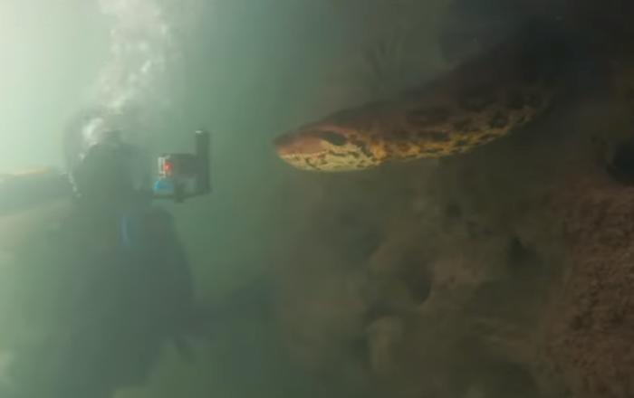 Dos buzos tropiezan con una enorme anaconda y esto es lo que les pasa...