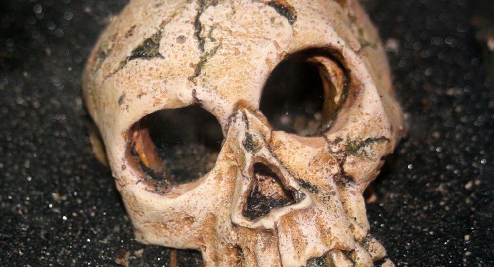Cráneo humano (imagen referencial)