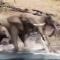 Un cocodrilo ataca a un elefante que bebe agua