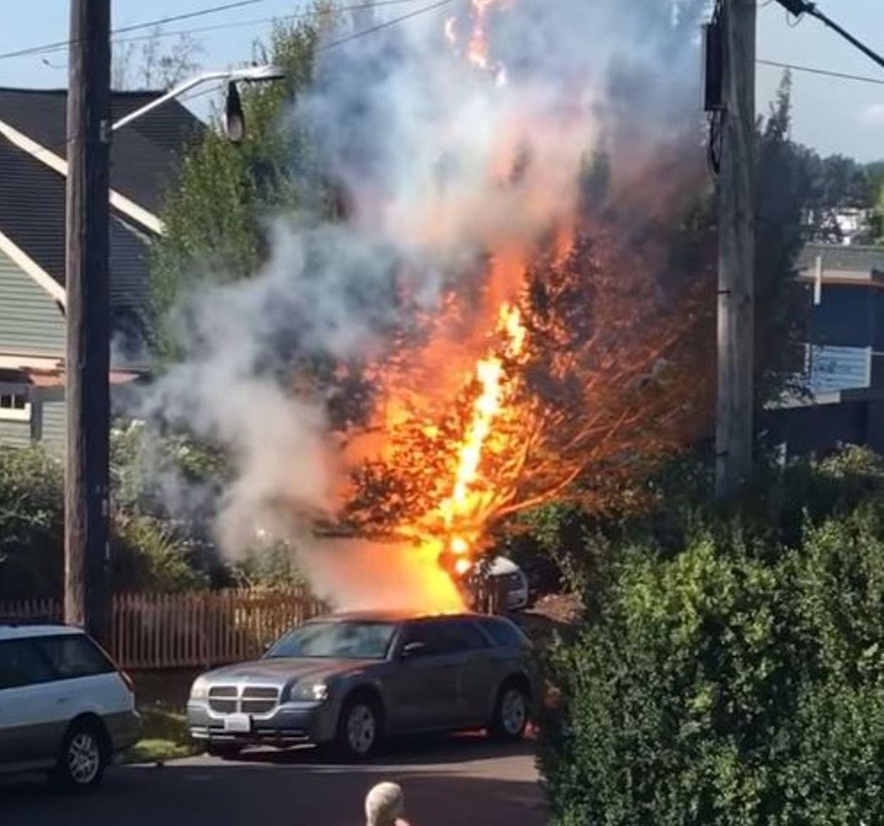 El árbol acabó explosionando