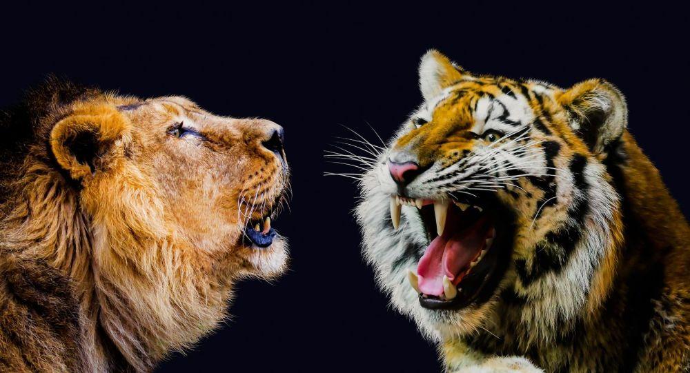 Un león y un tigre