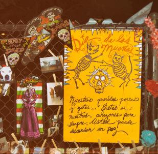 Mascotas en un altar durante celebración del Día de Muertos