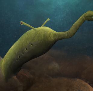Tullimonstrum, o Monstruo de Tully