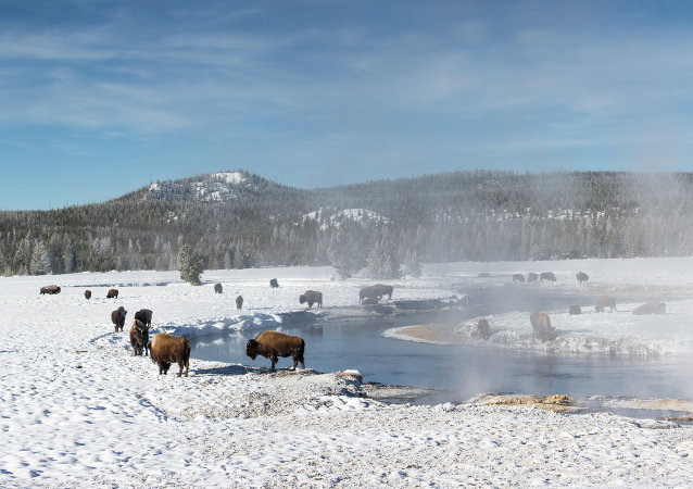 Alerta roja en Yellowstone, EEUU, por derrame de petróleo