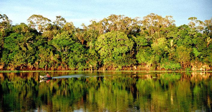La Policía de Brasil detiene al mayor causante de la deforestación en el Amazonas