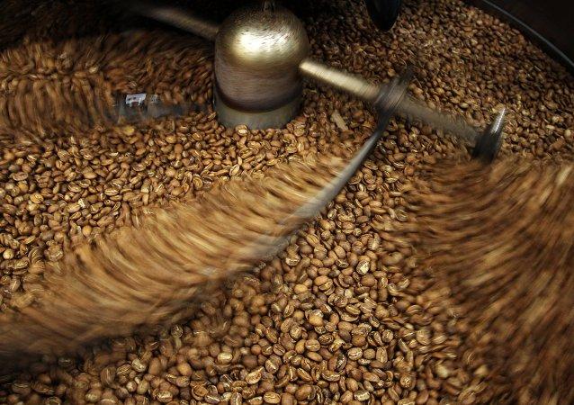 La producción de café en Rusia