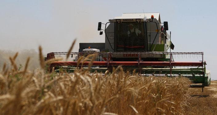 Cosecha de trigo en la región rusa de Krasnodar (archivo)