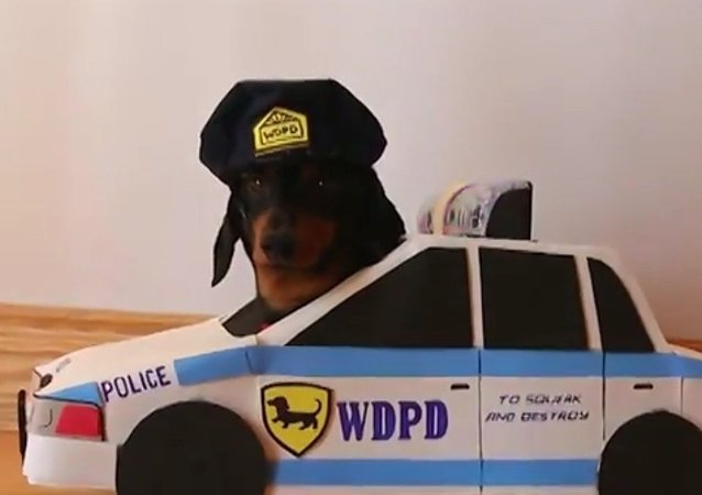 El policía y el ladrón, juego de perros