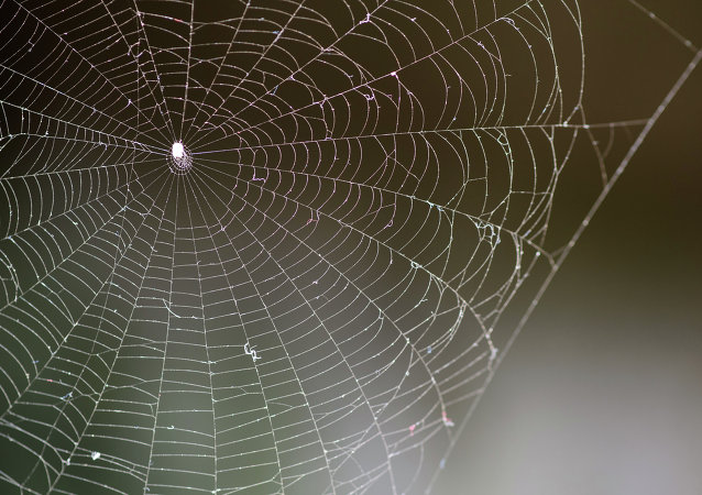 Telaraña las arañas