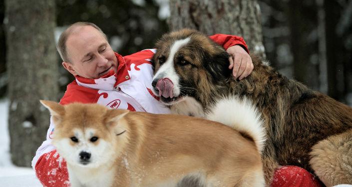 Vladímir Putin con sus perros