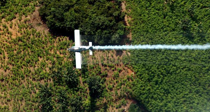 Fumigación de plantacion de coca (archivo)