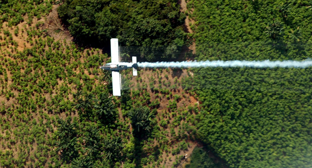 Fumigación de una plantacion de coca (archivo)