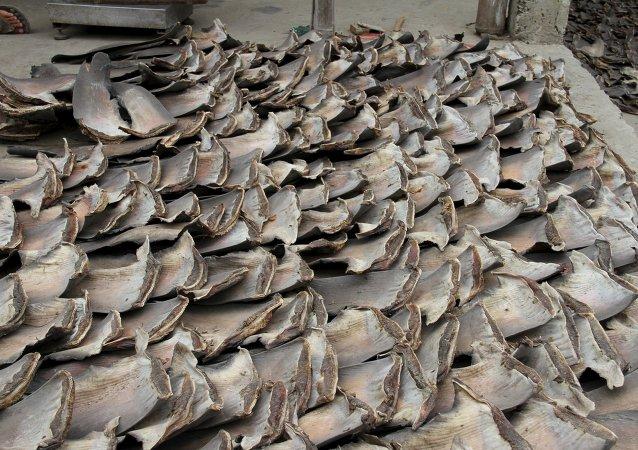 La policía aduanera de Ecuador decomisó unas 200.000 aletas de tiburón que los contrabandistas preveían enviar a Asia