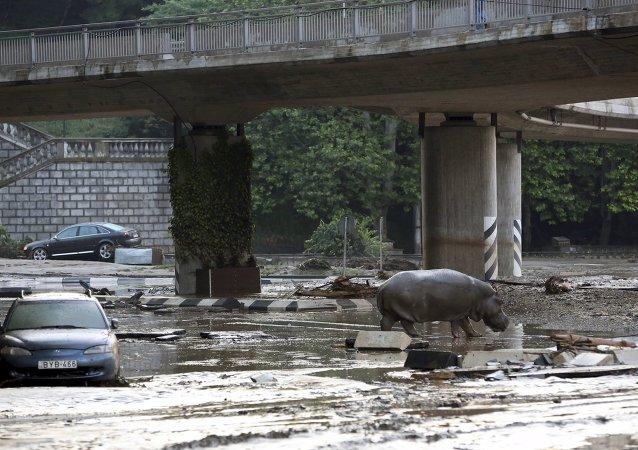 Al menos 11 muertos debido a inundaciones en Tiflis