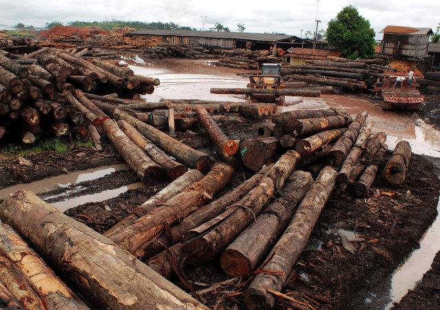 Rousseff anuncia el fin de la tala ilegal en Brasil para 2030