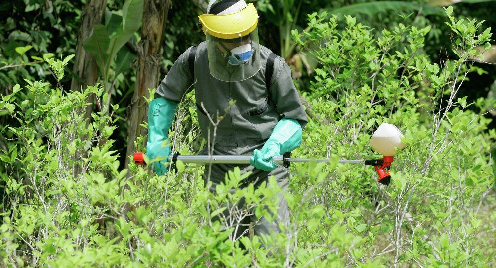 Un oficial de la policía antinarcóticos pulveriza herbicidas sobre una planta de coca durante una campaña para erradicar cultivos de coca en Colombia