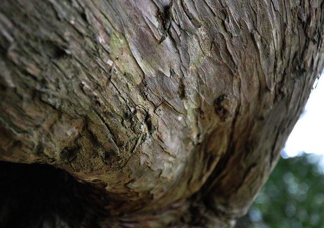 Un árbol (archivo)