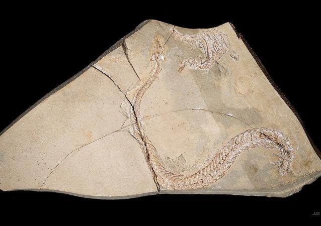 Eupodophis descouensi, serpiente con pies antiguo de la familia  Pachyophiidae