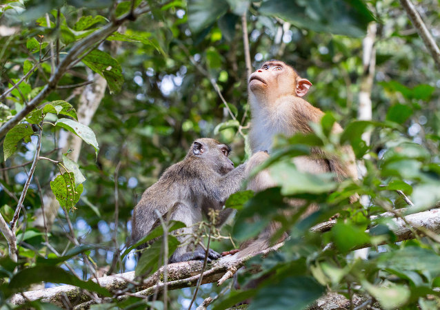 Monos en el bosque