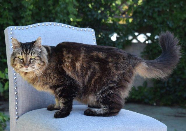 Corduroy, el gato más viejo del mundo