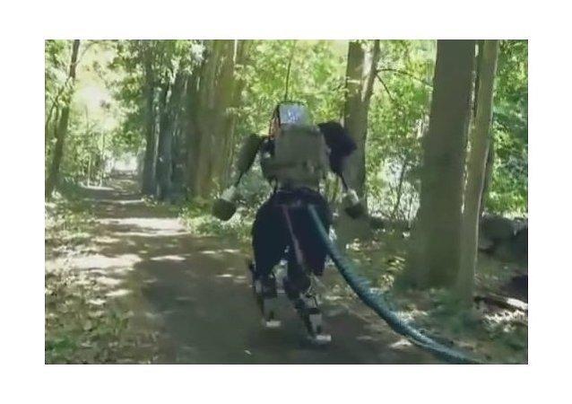 Un robot en el bosque